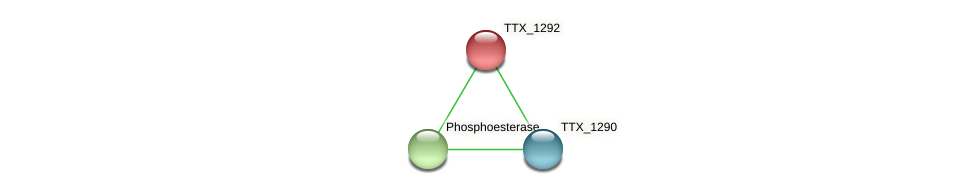 TTX_1292 protein (Thermoproteus tenax) - STRING interaction network