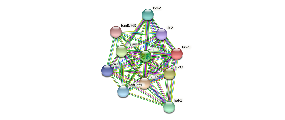 fumC protein (Thermoproteus tenax) - STRING interaction network
