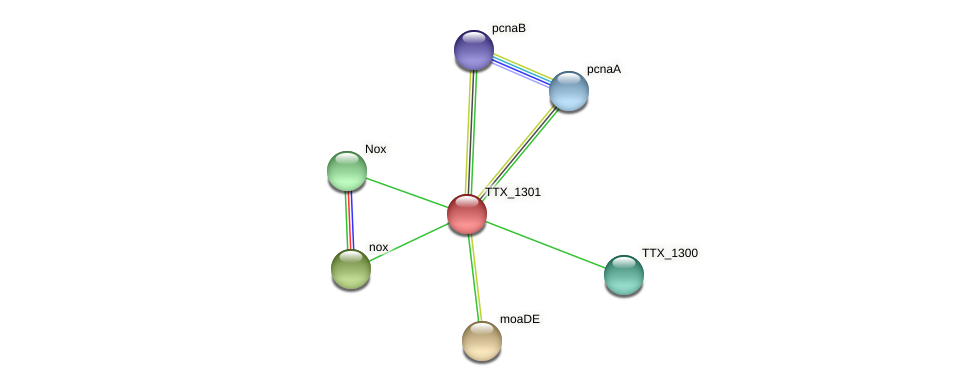 TTX_1301 protein (Thermoproteus tenax) - STRING interaction network