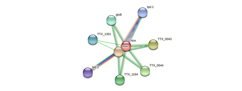 TTX_1303 protein (Thermoproteus tenax) - STRING interaction network