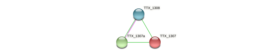 TTX_1307 protein (Thermoproteus tenax) - STRING interaction network