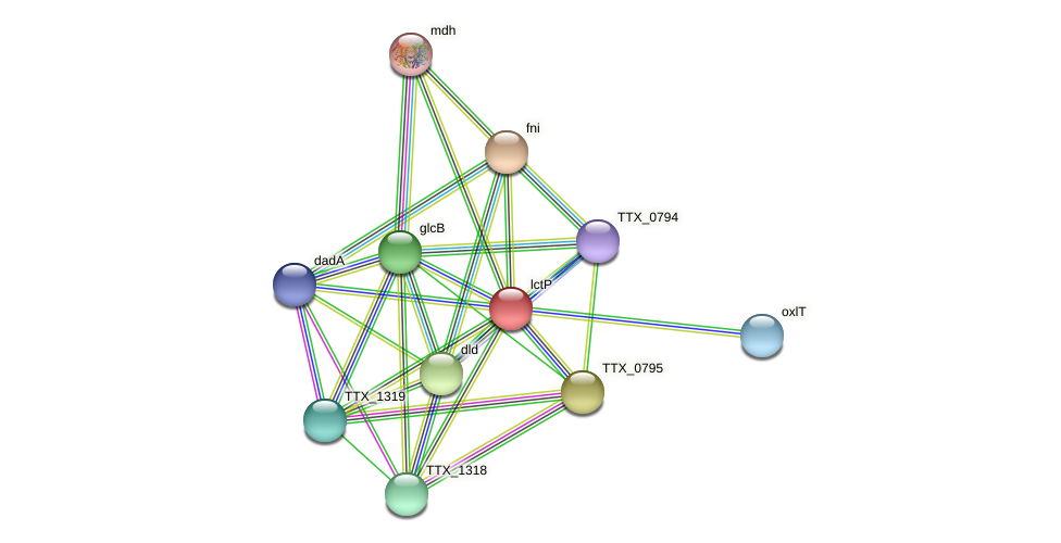 lctP protein (Thermoproteus tenax) - STRING interaction network
