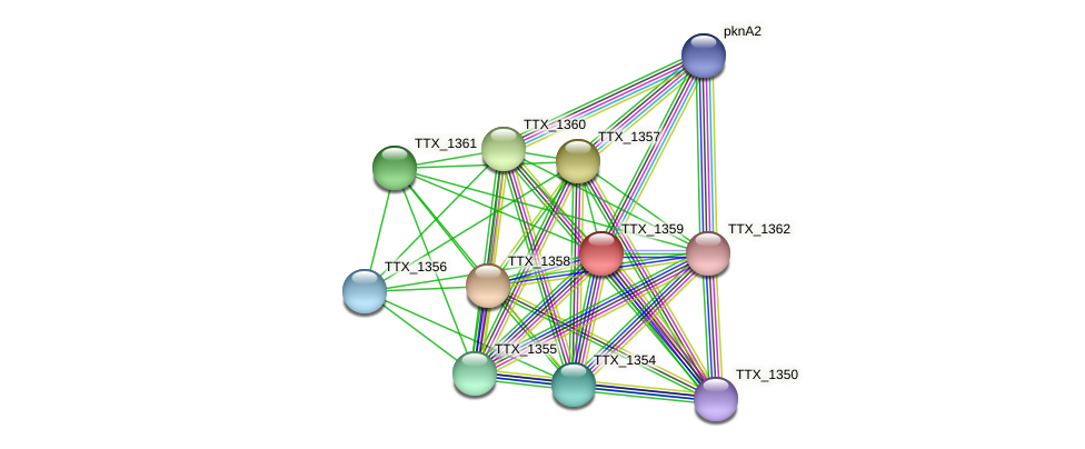 TTX_1359 protein (Thermoproteus tenax) - STRING interaction network