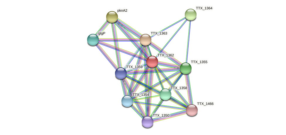 TTX_1362 protein (Thermoproteus tenax) - STRING interaction network