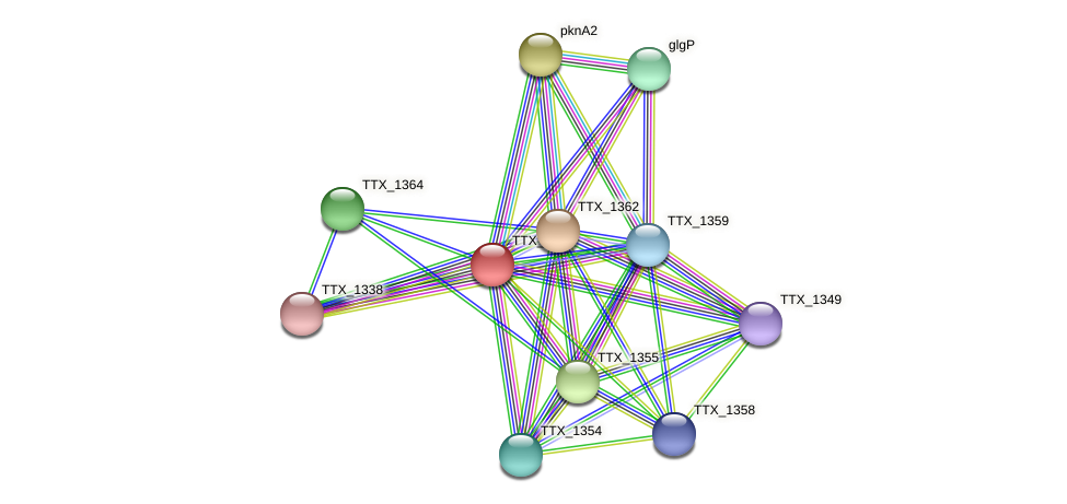 TTX_1363 protein (Thermoproteus tenax) - STRING interaction network
