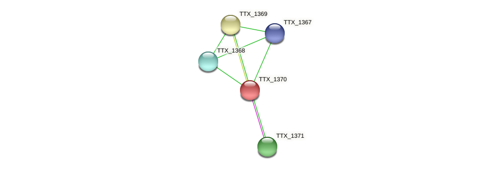 TTX_1370 protein (Thermoproteus tenax) - STRING interaction network