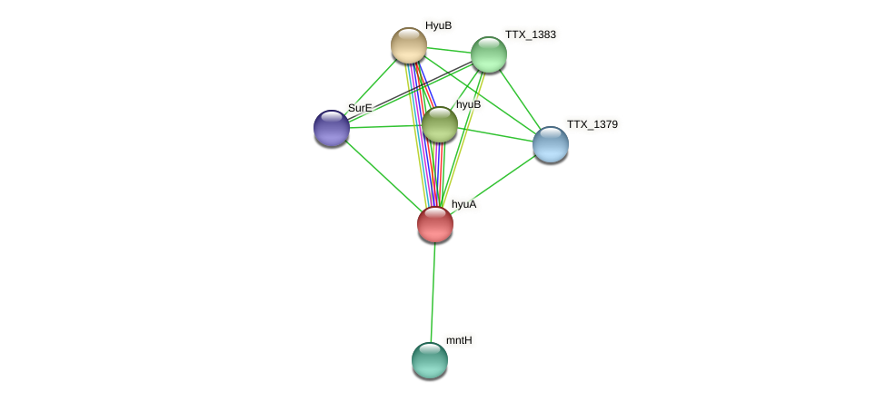 hyuA protein (Thermoproteus tenax) - STRING interaction network
