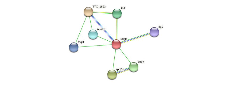 udgB protein (Thermoproteus tenax) - STRING interaction network