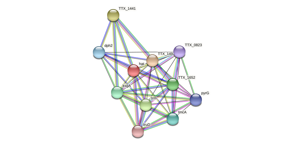 hat protein (Thermoproteus tenax) - STRING interaction network