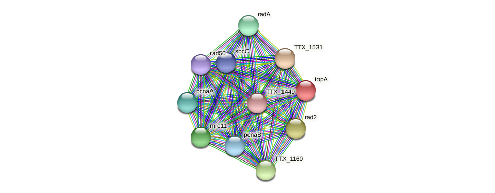 topA protein (Thermoproteus tenax) - STRING interaction network