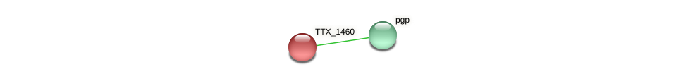 TTX_1460 protein (Thermoproteus tenax) - STRING interaction network