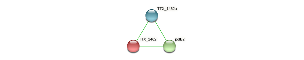 TTX_1462 protein (Thermoproteus tenax) - STRING interaction network