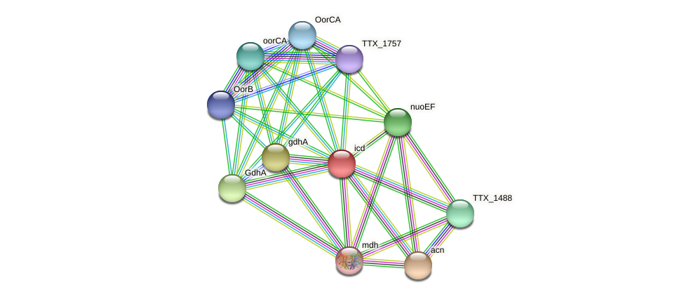 icd protein (Thermoproteus tenax) - STRING interaction network