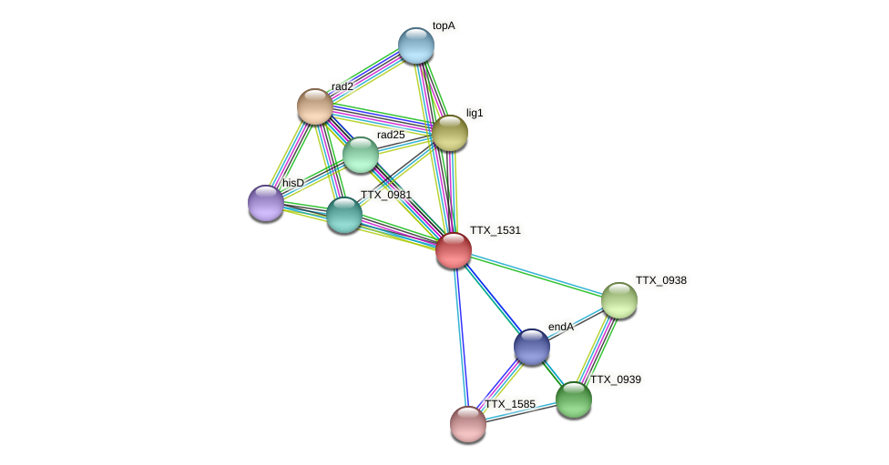 TTX_1531 protein (Thermoproteus tenax) - STRING interaction network