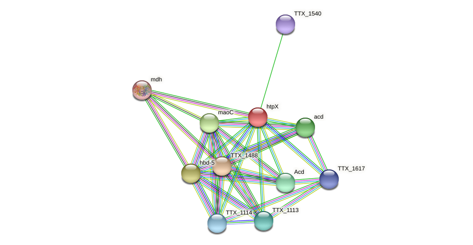 TTX_1541 protein (Thermoproteus tenax) - STRING interaction network