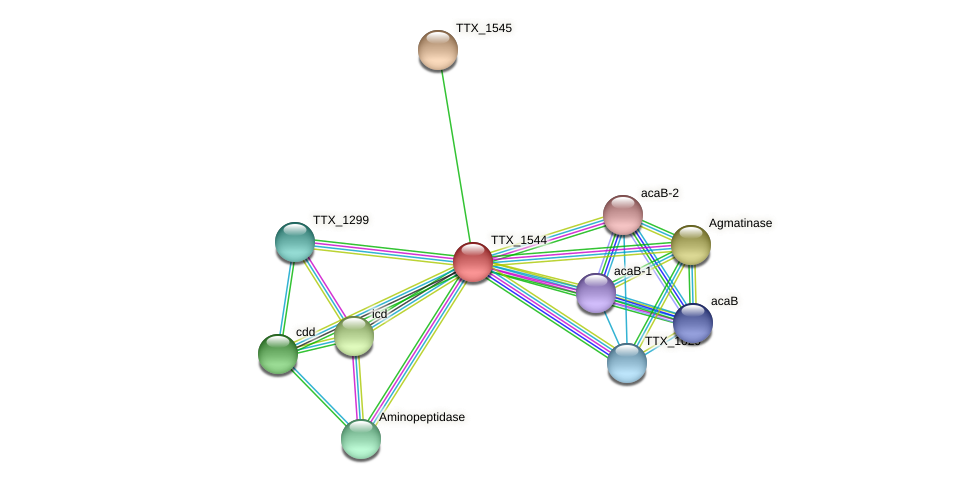 TTX_1544 protein (Thermoproteus tenax) - STRING interaction network