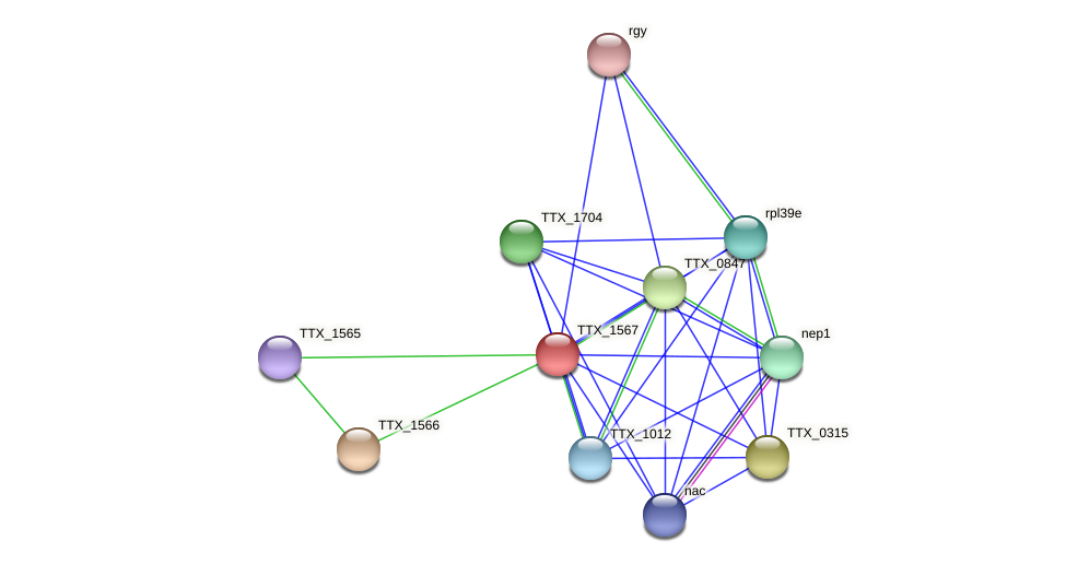 TTX_1567 protein (Thermoproteus tenax) - STRING interaction network
