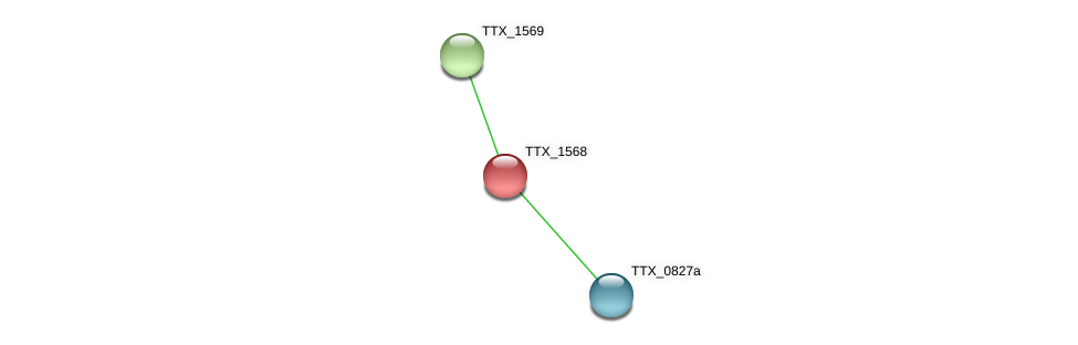 TTX_1568 protein (Thermoproteus tenax) - STRING interaction network