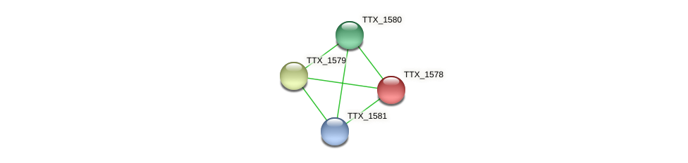 TTX_1578 protein (Thermoproteus tenax) - STRING interaction network