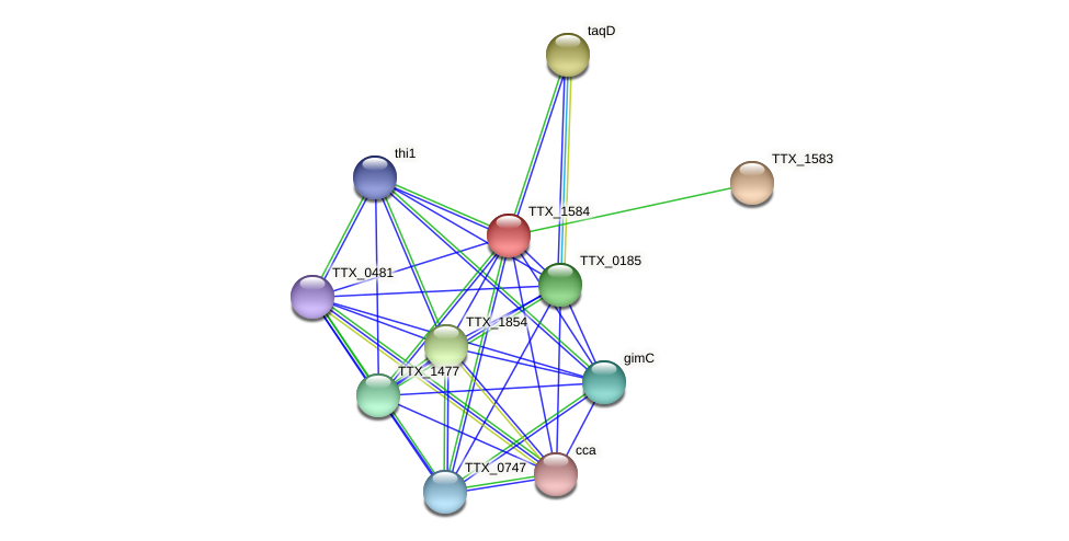 TTX_1584 protein (Thermoproteus tenax) - STRING interaction network