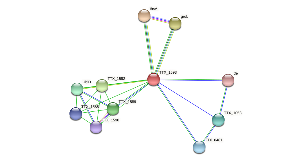 TTX_1593 protein (Thermoproteus tenax) - STRING interaction network