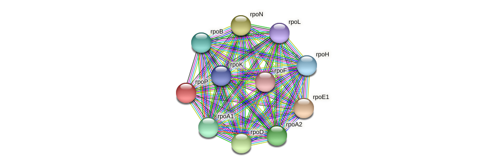 rpoP protein (Thermoproteus tenax) - STRING interaction network