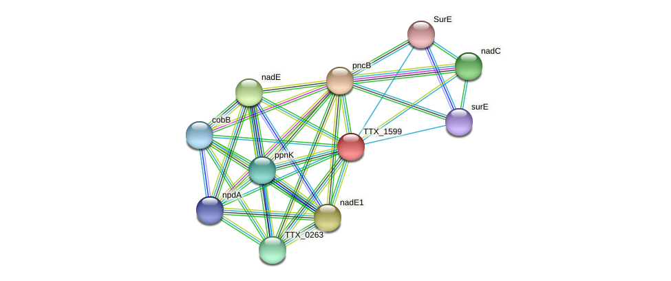 TTX_1599 protein (Thermoproteus tenax) - STRING interaction network