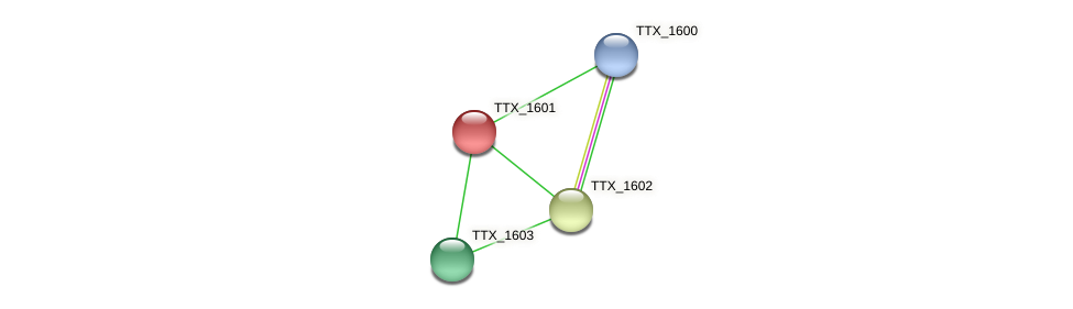 TTX_1601 protein (Thermoproteus tenax) - STRING interaction network