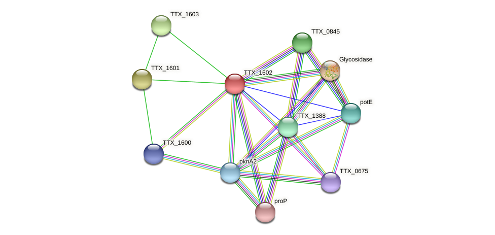TTX_1602 protein (Thermoproteus tenax) - STRING interaction network