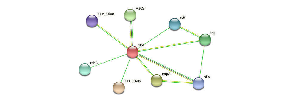 trkA protein (Thermoproteus tenax) - STRING interaction network