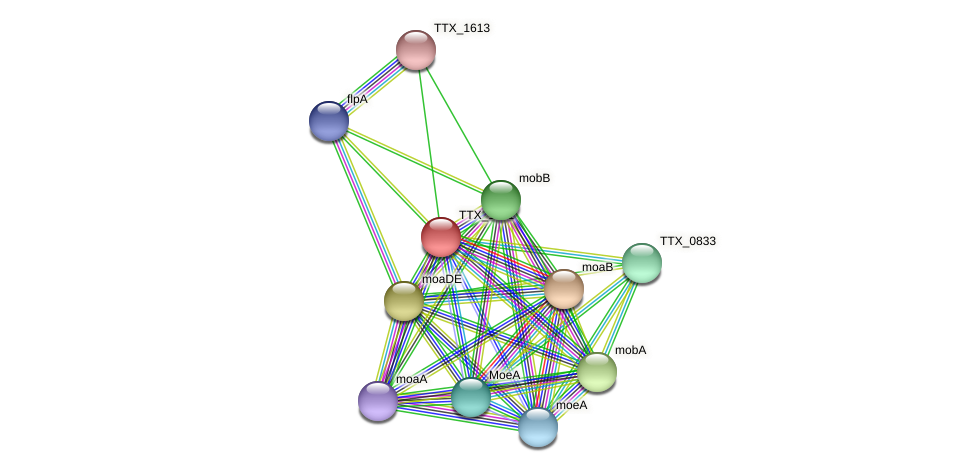 TTX_1611 protein (Thermoproteus tenax) - STRING interaction network