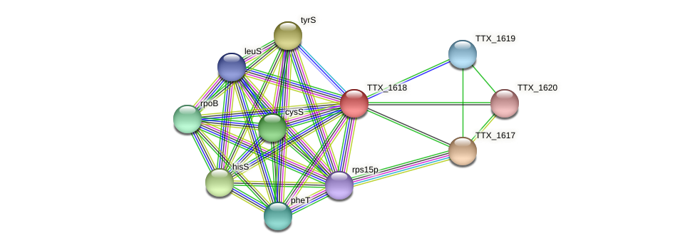 TTX_1618 protein (Thermoproteus tenax) - STRING interaction network