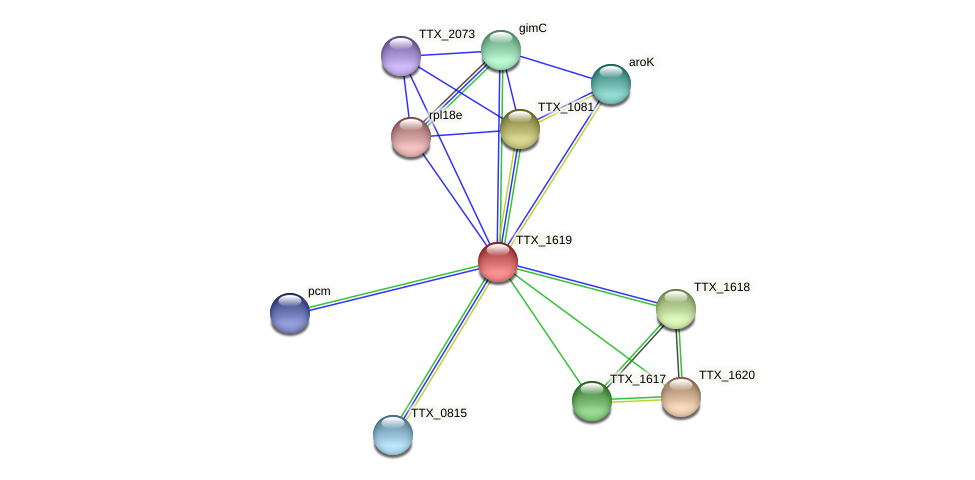 TTX_1619 protein (Thermoproteus tenax) - STRING interaction network