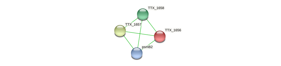TTX_1656 protein (Thermoproteus tenax) - STRING interaction network