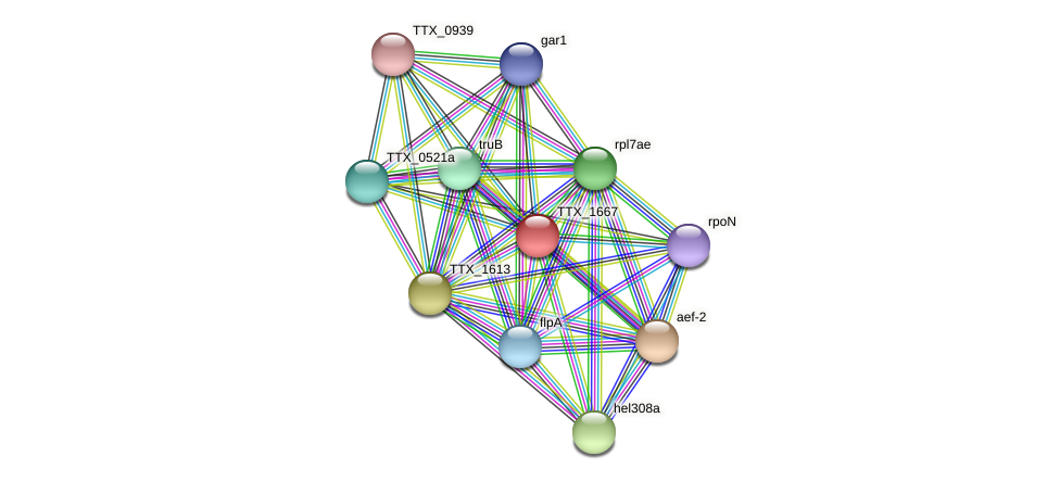 TTX_1667 protein (Thermoproteus tenax) - STRING interaction network
