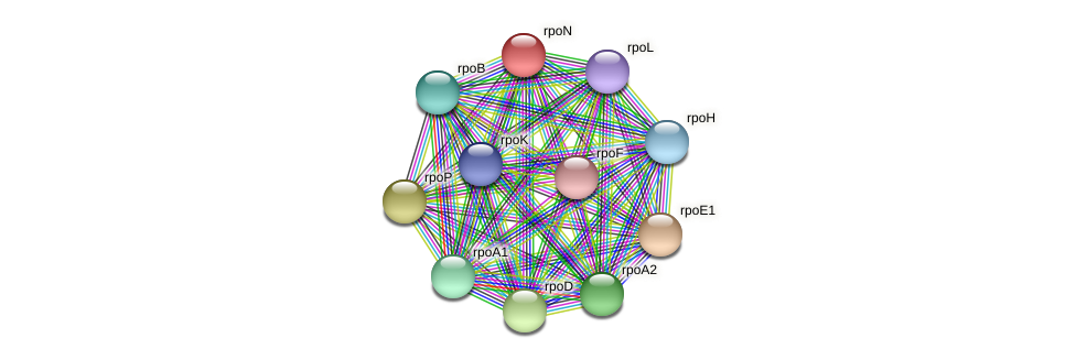 rpoN protein (Thermoproteus tenax) - STRING interaction network