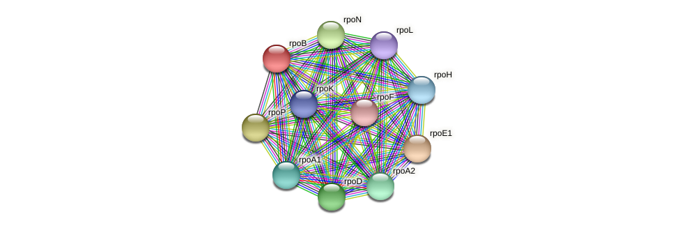 rpoB protein (Thermoproteus tenax) - STRING interaction network