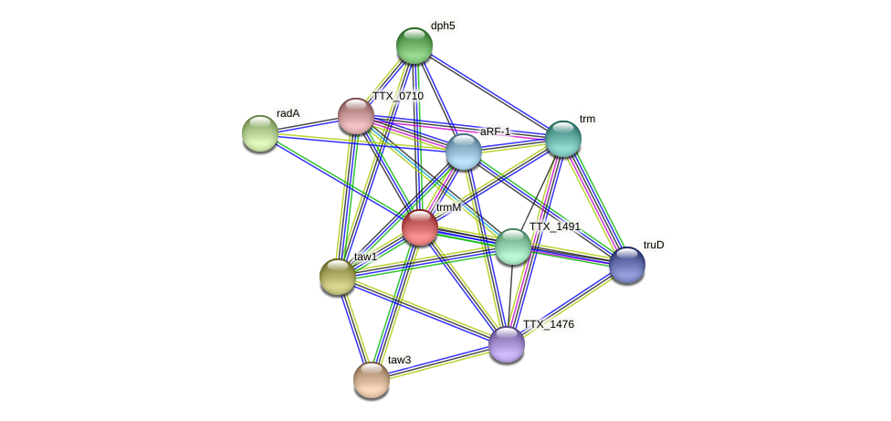trmM protein (Thermoproteus tenax) - STRING interaction network