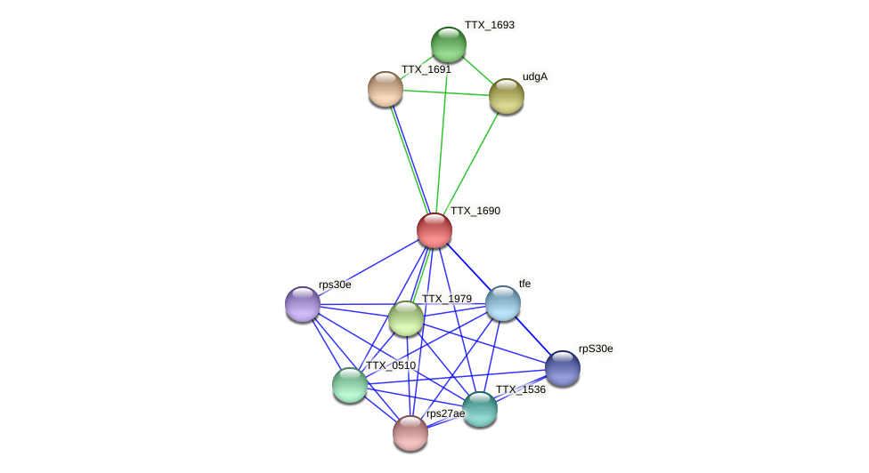 TTX_1690 protein (Thermoproteus tenax) - STRING interaction network