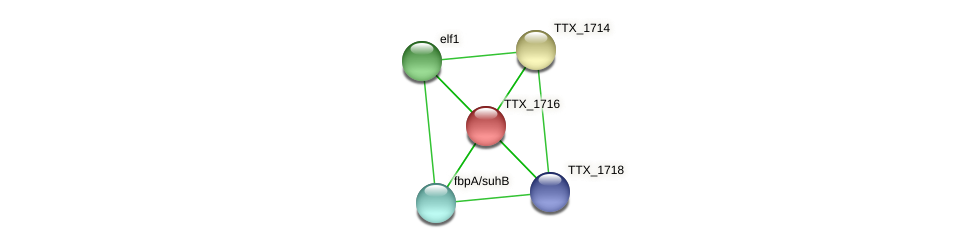 TTX_1716 protein (Thermoproteus tenax) - STRING interaction network