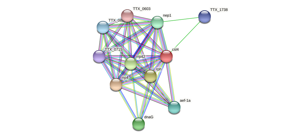 csl4 protein (Thermoproteus tenax) - STRING interaction network