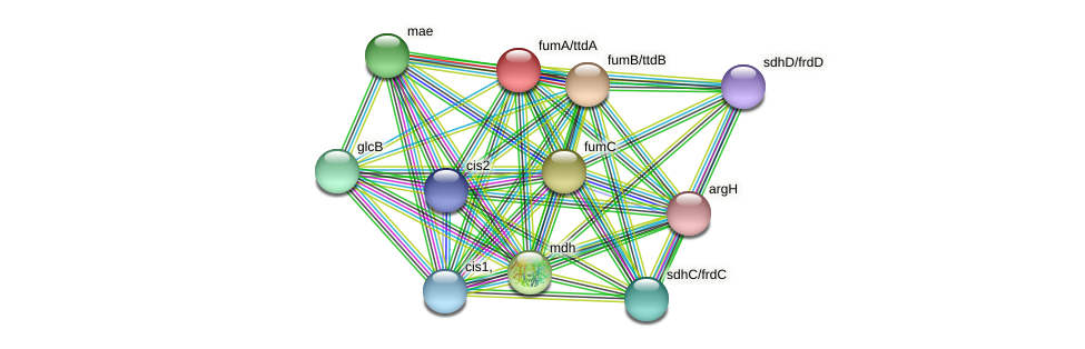 fumA protein (Thermoproteus tenax) - STRING interaction network