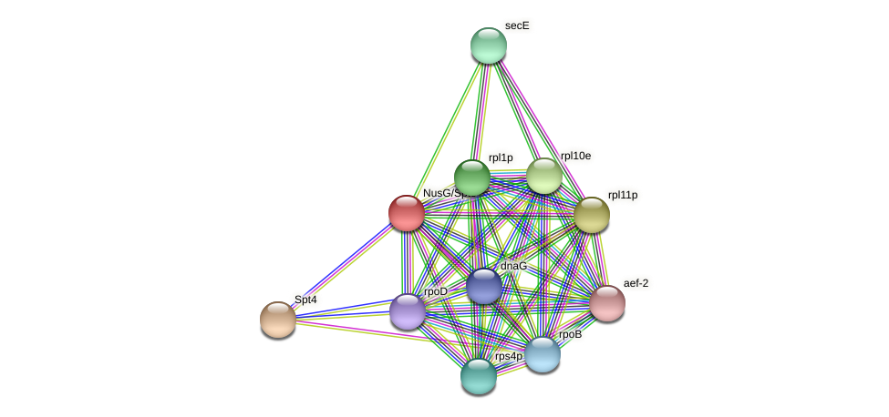 NusG/Spt5 protein (Thermoproteus tenax) - STRING interaction network