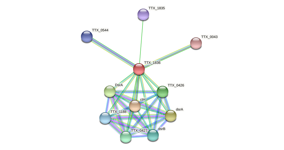 TTX_1836 protein (Thermoproteus tenax) - STRING interaction network