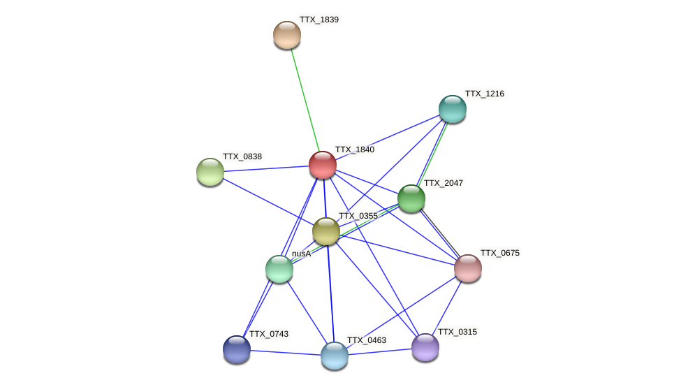 TTX_1840 protein (Thermoproteus tenax) - STRING interaction network