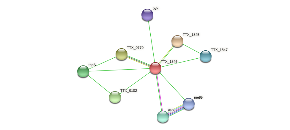 TTX_1846 protein (Thermoproteus tenax) - STRING interaction network