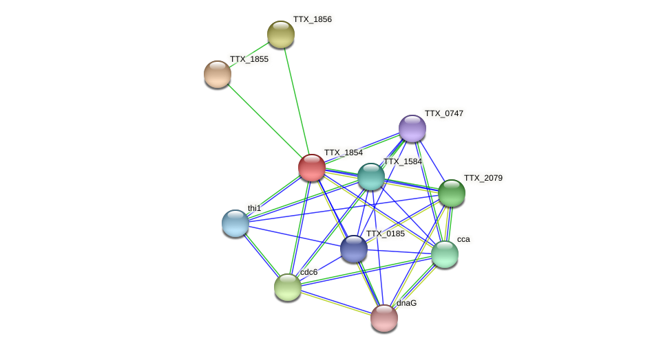 TTX_1854 protein (Thermoproteus tenax) - STRING interaction network