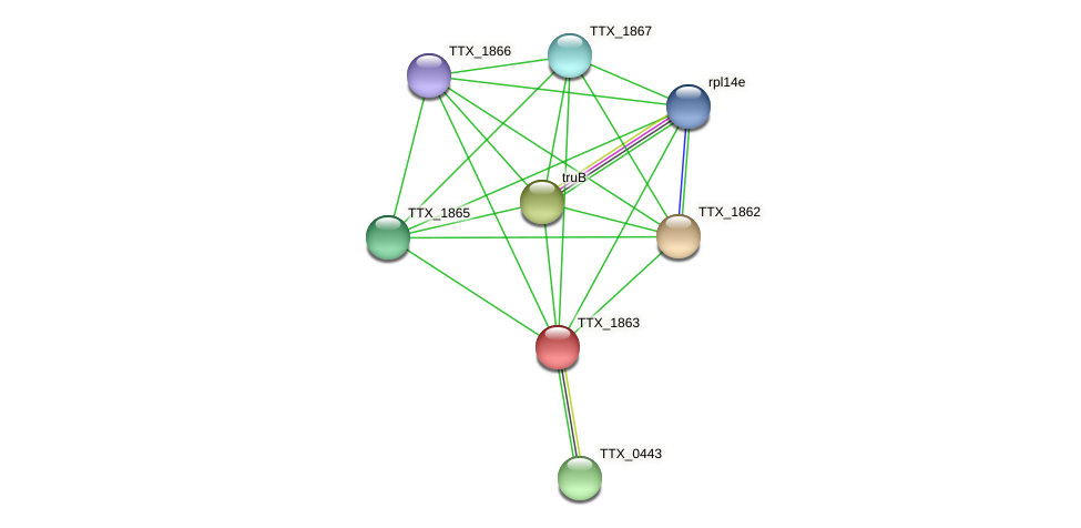 TTX_1863 protein (Thermoproteus tenax) - STRING interaction network