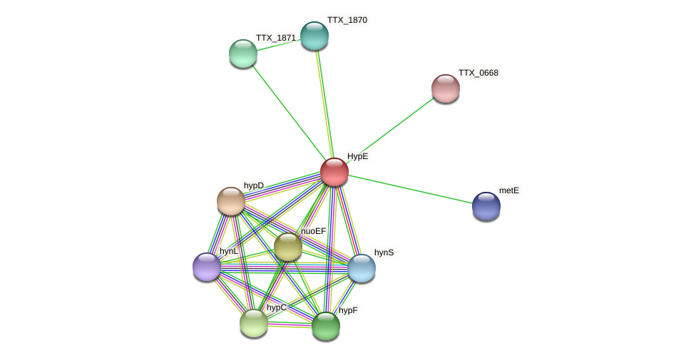 TTX_1872 protein (Thermoproteus tenax) - STRING interaction network