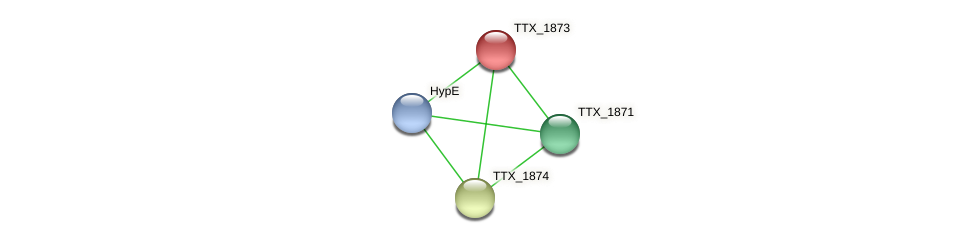 TTX_1873 protein (Thermoproteus tenax) - STRING interaction network